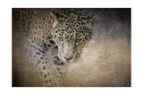 Stalking Her Prey Leopard Giclee Print by Jai Johnson