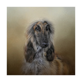 The Elegant Afghan Hound Giclee Print by Jai Johnson