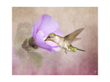 A Taste of Nectar Hummingbird Giclee Print by Jai Johnson