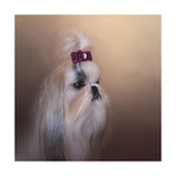 All Dolled Up Shih Tzu Giclee Print by Jai Johnson