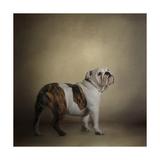 I Think I Smell a Treat Bulldog Giclee Print by Jai Johnson