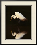 Great Egret in Lagoon, Pantanal, Brazil Framed Photographic Print by Frans Lanting