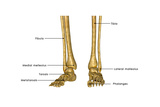 Skeleton Legs Labelled Prints by  7activestudio