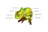 Chameleon Poster af  7activestudio
