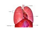 Human Organs Prints by  7activestudio