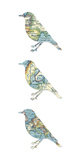 Map Birds Giclee Print by Sasha Blake