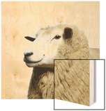 Wooly Sheep Wood Print by Adrian Burke