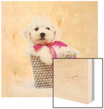 Bichon Frise Puppy Wood Sign by Pat Doyle