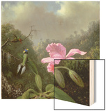 Still Life with an Orchid and a Pair of Hummingbirds, C.1890S Wood Print by Martin Johnson Heade