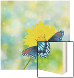 Red-Spotted Purple Admiral On Yellow Coreopsis Flower Wood Print by Sari ONeal