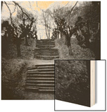 Run-Down Stairway Among Leafless Cherry Trees Wood Print by Annette Fournet