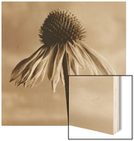 Lone Coneflower Wood Sign by Tom Marks