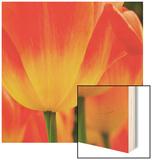 Tulip's Petals Wood Print by George Lepp