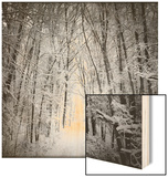 Forest in winter Wood Print by George Disario