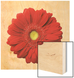 Red Gerbera Daisy Wood Sign