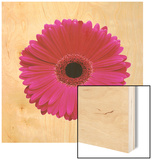 Hot Pink Gerbera Daisy Wood Sign