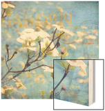Dogwood II - Blossoming Tree Wood Print by Amy Melious