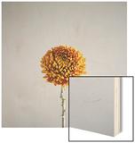 Orange Flower Wood Print by David Vintiner