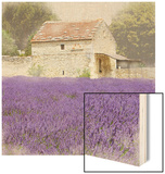 Tuscan Lavender Wood Print by Bret Staehling