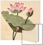 Lotus Blossom - 1 Wood Print by Robert McIntosh