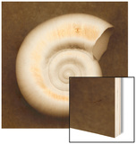 White Spiral Shell Wood Print by John Kuss
