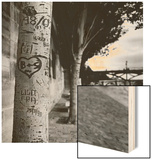 Graffiti on Tree Trunk Wood Print by Ariel Ruiz I Altaba