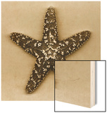 Sugar Starfish Wood Print by John Kuss