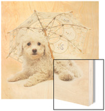 Bichon Frise and Parasol Wood Print by Pat Doyle