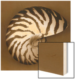 Nautilus Shell Wood Print by John Kuss
