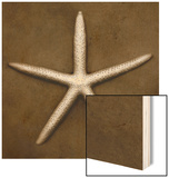 White Starfish Wood Print by John Kuss