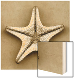 Sugar Starfish Bottom Wood Print by John Kuss