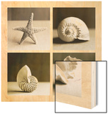 Sea Shells Four Patch Wood Print