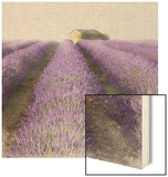 Lavender Field Wood Print by Bret Staehling