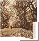 Central Park Wood Print by Sasha Gleyzer