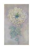Chrysantheme (Großformat) Giclée-Druck von Piet Mondrian