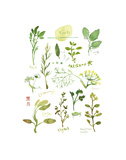 Herbs Prints by Lucile Prache