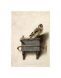 Le Chardonneret, 1654 Reproduction procédé giclée par Carel Fabritius