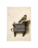 The Goldfinch, 1654 Giclée-tryk af Carel Fabritius