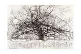 Study for the Grey Tree, 1911 Giclée-tryk af Piet Mondrian