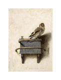 The Goldfinch, 1654 Wydruk giclee autor Carel Fabritius