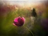 A Pink Childhood Memory Photographic Print by Shenshen Dou