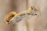 I Can Fly! Photographic Print by Mircea Costina