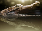 Croc Photographic Print by Fahmi Bhs
