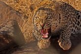 In No Uncertain Terms Photographic Print by Ashley Vincent
