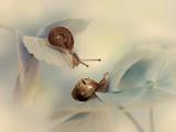 Snails Photographic Print by Ellen Van