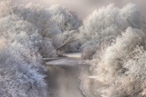Winter Song Photographic Print by Sebestyen Bela