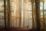The Enchanted Wood Photographic Print by Heiko Gerlicher