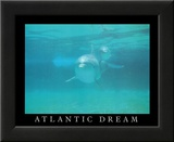 Atlantic Dream Dolphins Posters