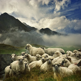 The Silence of the Lambs Fotografisk tryk af Istvan Kadar