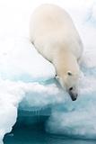Arctic Composition Fotografisk trykk av Marco Gaiotti